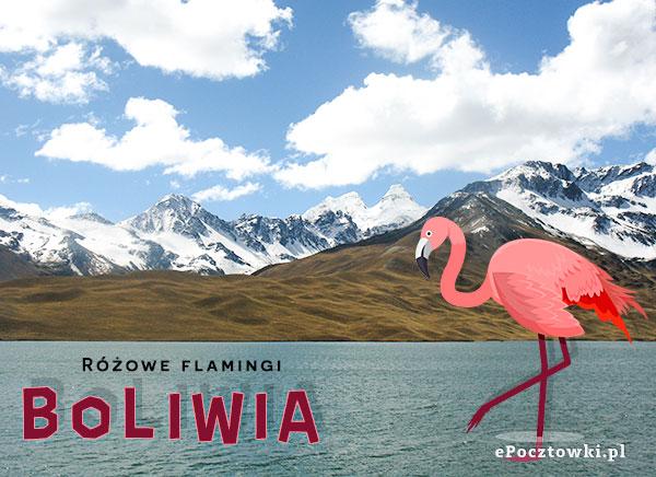 Flamingi w Boliwii